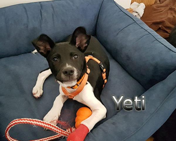 Yeti-(13)web