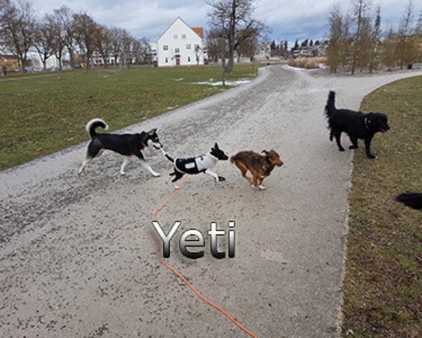 Yeti-(15)web