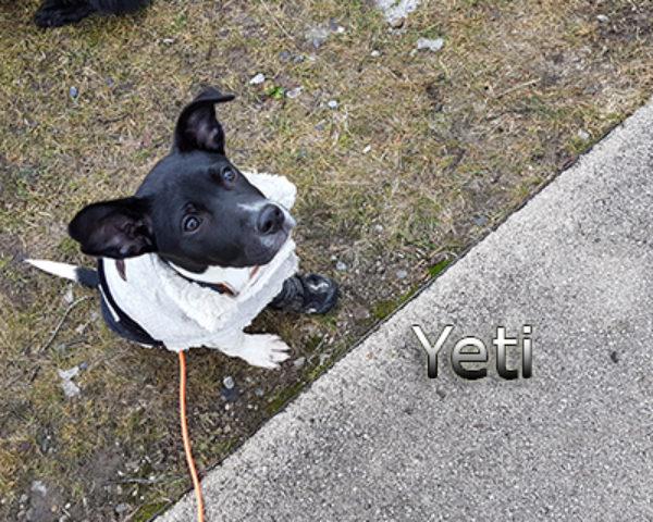 Yeti-(1)web