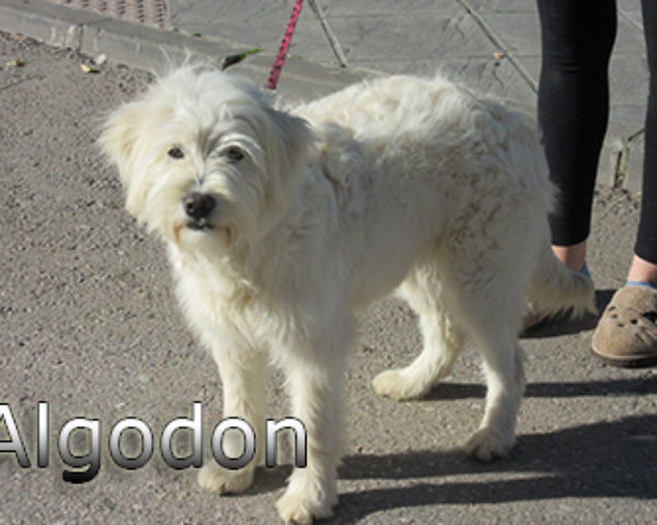 Algodon-(1)web