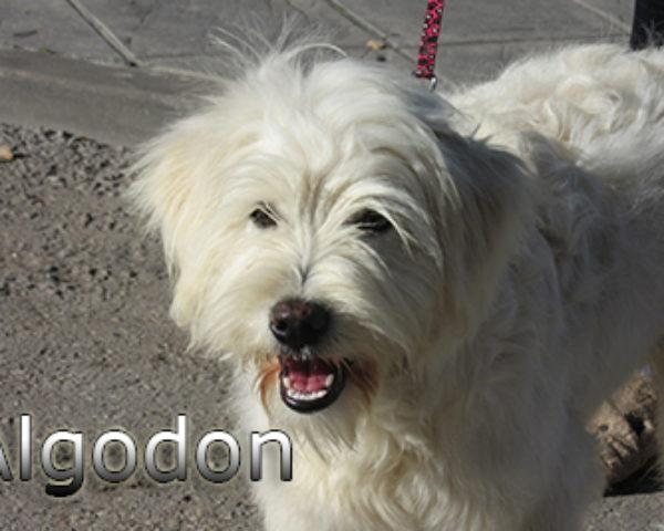 Algodon-(2)web
