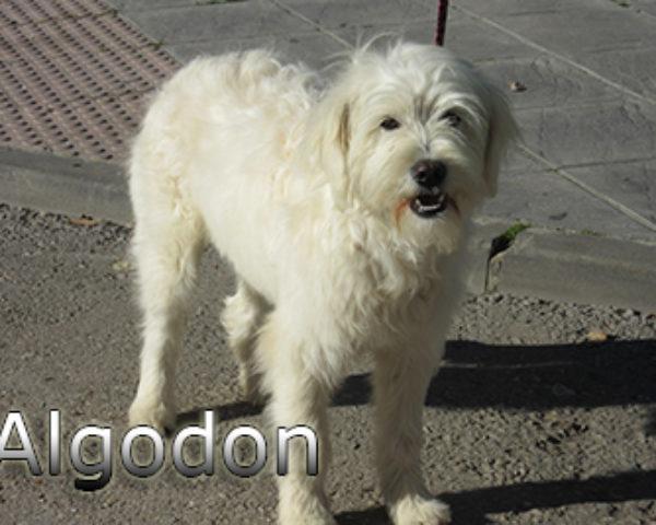 Algodon-(3)web