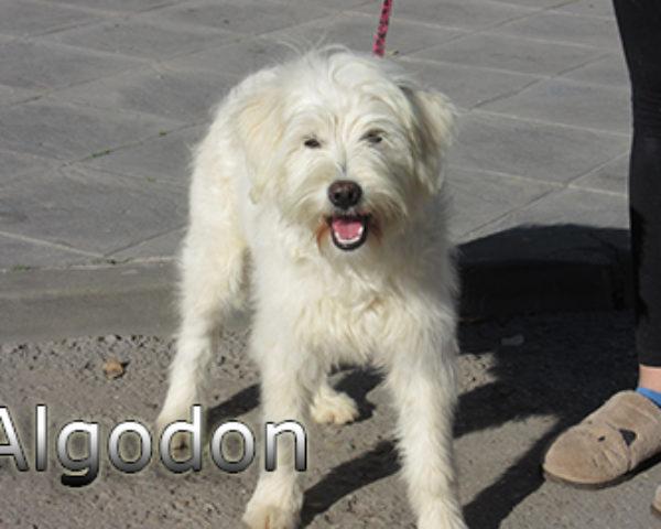 Algodon-(4)web