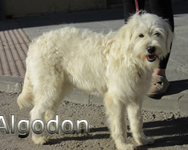 Algodon-(5)web