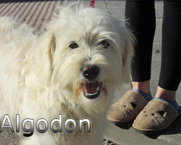 Algodon-(6)web