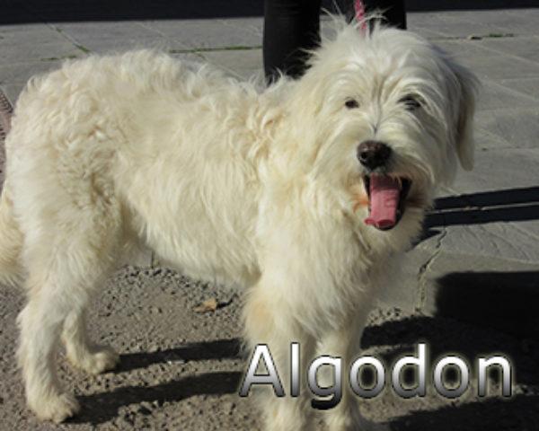 Algodon-(7)web