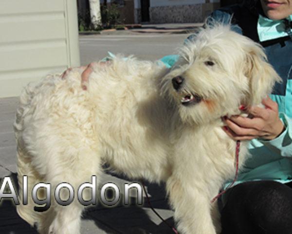 Algodon-(8)web