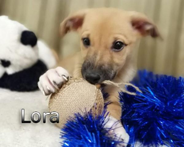 Lora-(2)web
