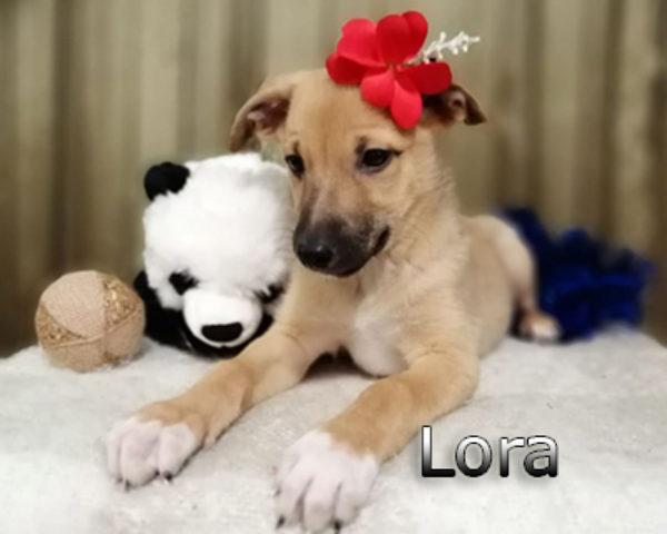 Lora-(3)web