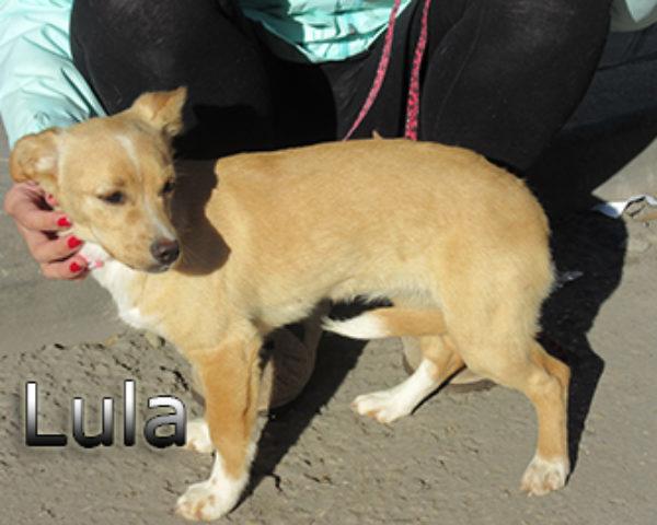 Lula-(7)web