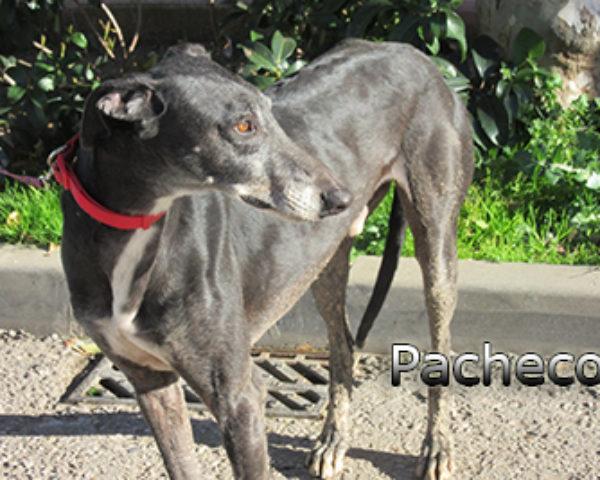 Pacheco-(10)web