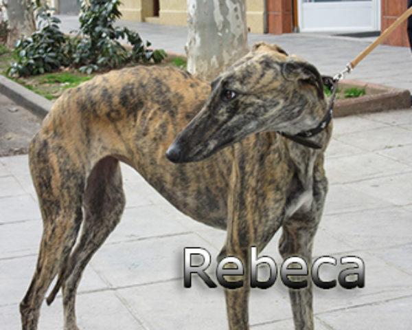 Rebeca-(1)web