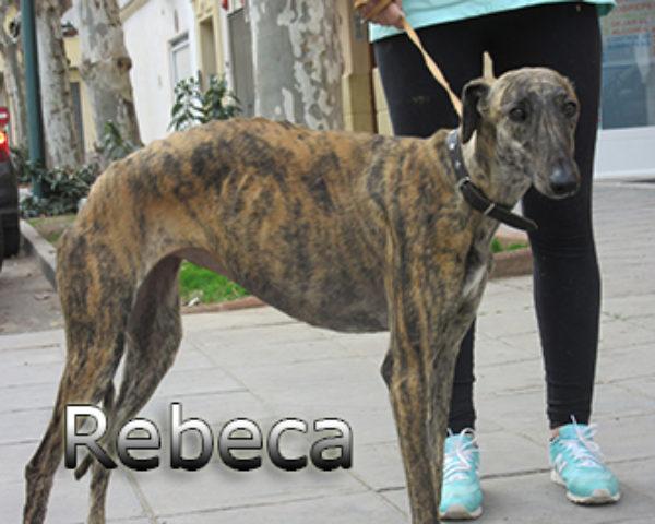 Rebeca-(3)web