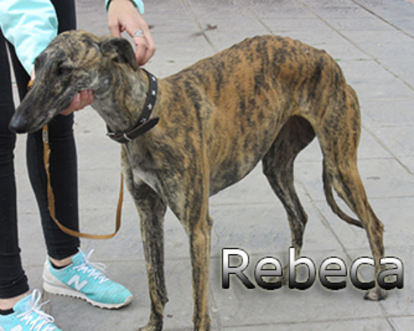 Rebeca-(4)web