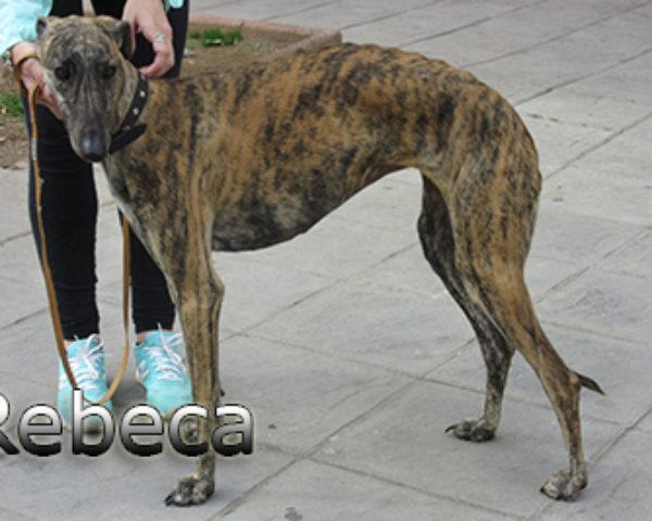 Rebeca-(6)web