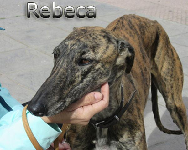 Rebeca-(7)web