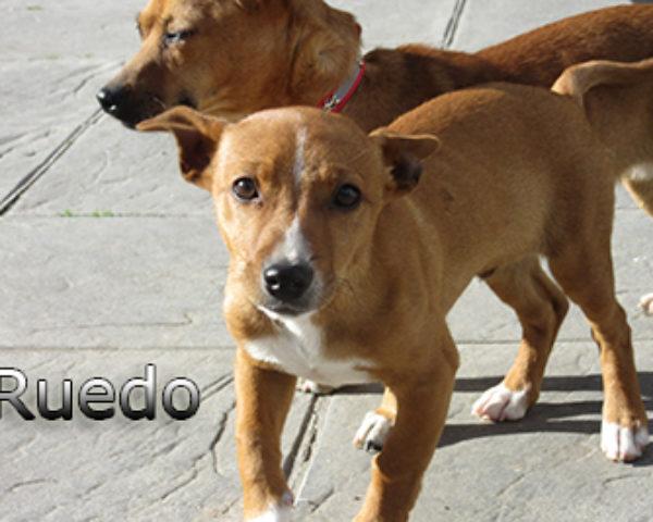 Ruedo-(1)web