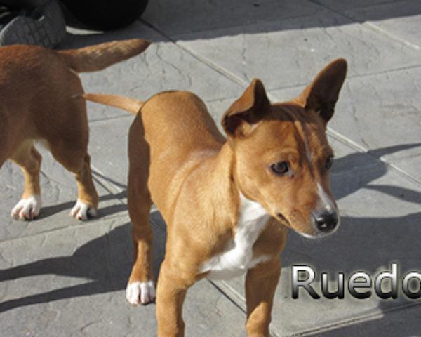 Ruedo-(2)web