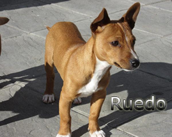 Ruedo-(3)web
