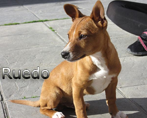 Ruedo-(4)web
