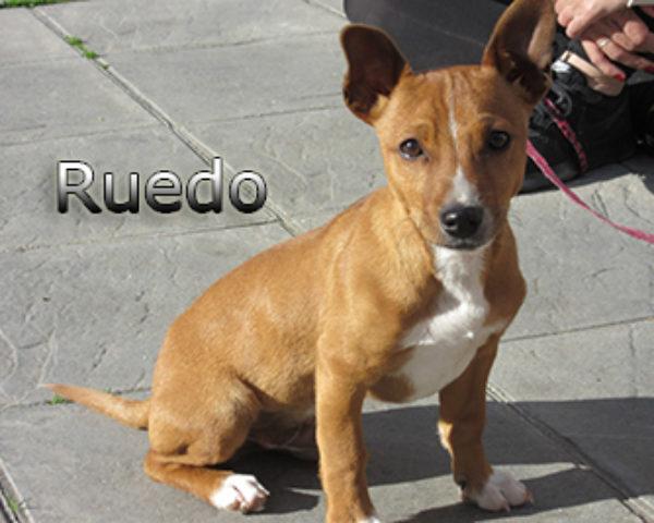 Ruedo-(5)web