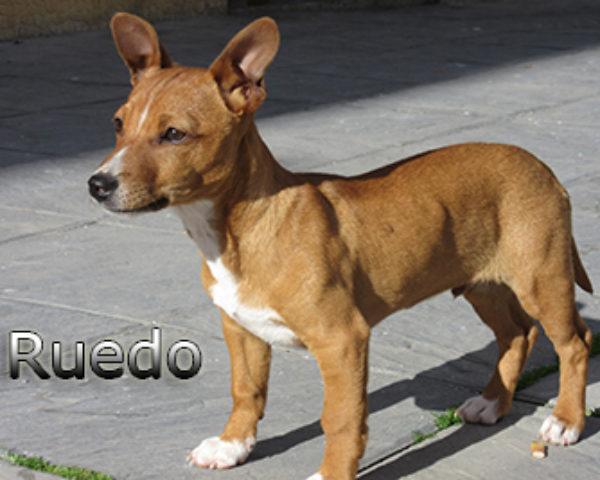 Ruedo-(6)web
