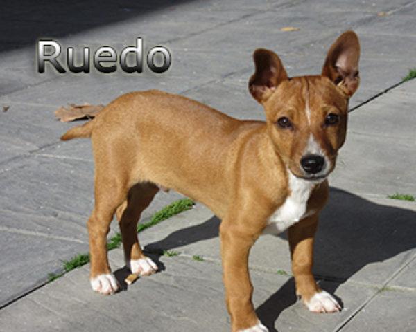 Ruedo-(7)web