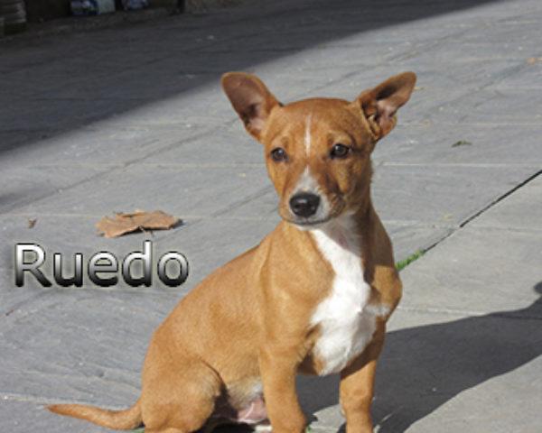 Ruedo-(8)web