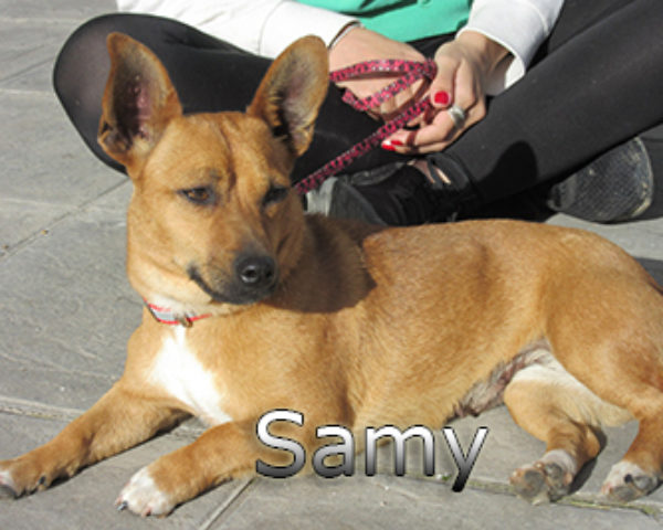 Samy-(11)web