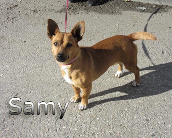 Samy-(2)web