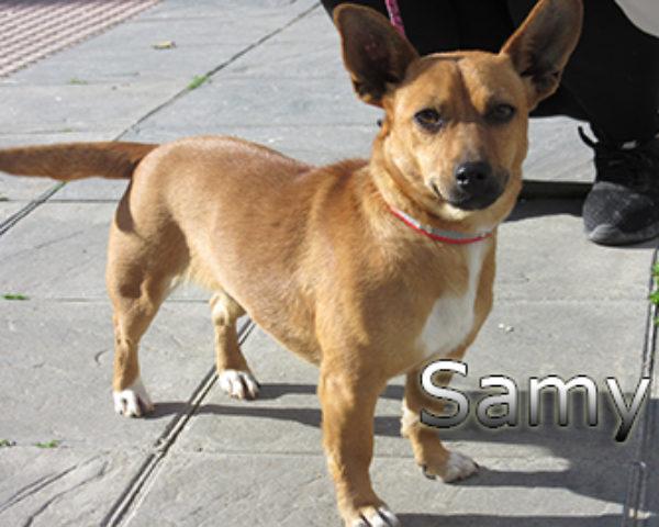 Samy-(3)web