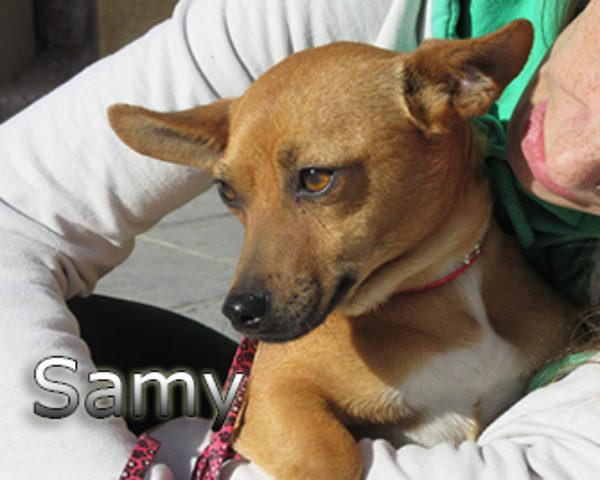 Samy-(4)web