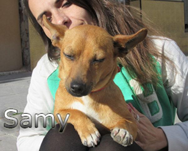 Samy-(5)web