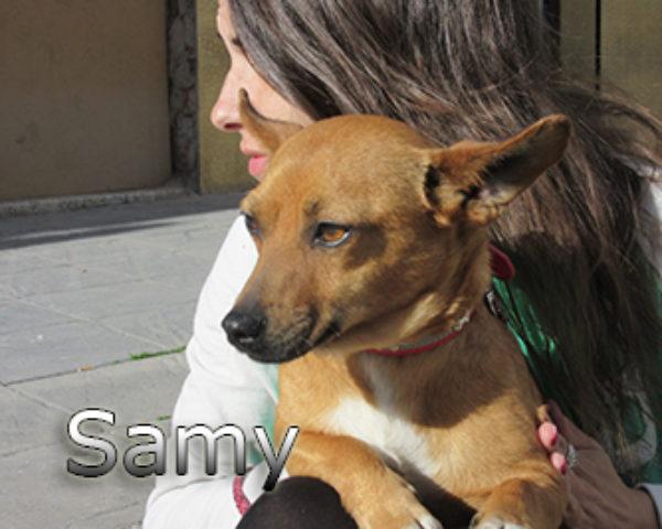 Samy-(6)web