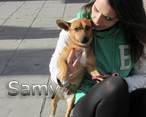 Samy-(7)web