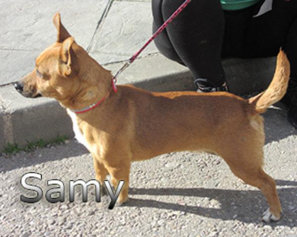 Samy-(8)web