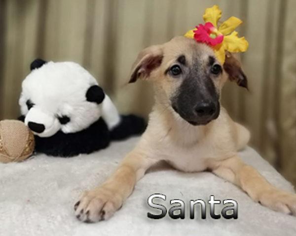 Santa-(1)web