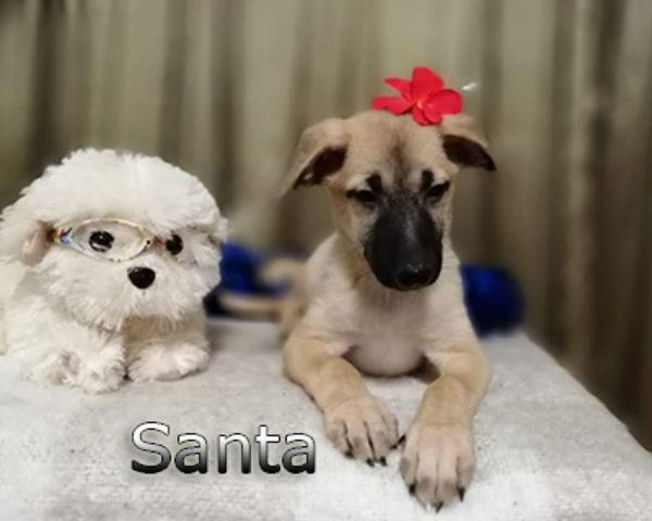 Santa-(2)web