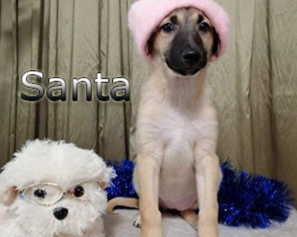 Santa-(3)web