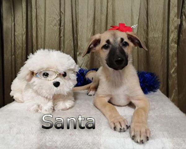 Santa-(4)web
