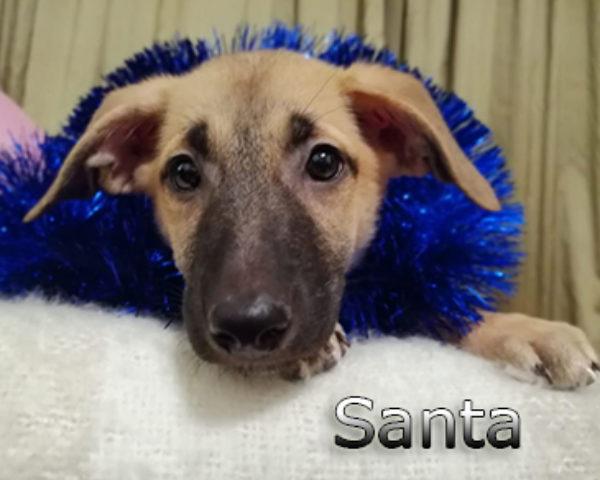 Santa-(5)web