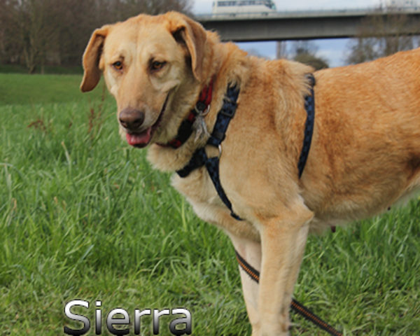 Sierra_Update032019-(36)web