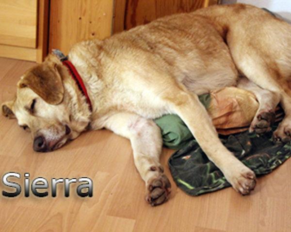 Sierra_Update042019-(11)web