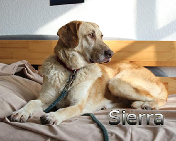Sierra_Update042019-(1)web