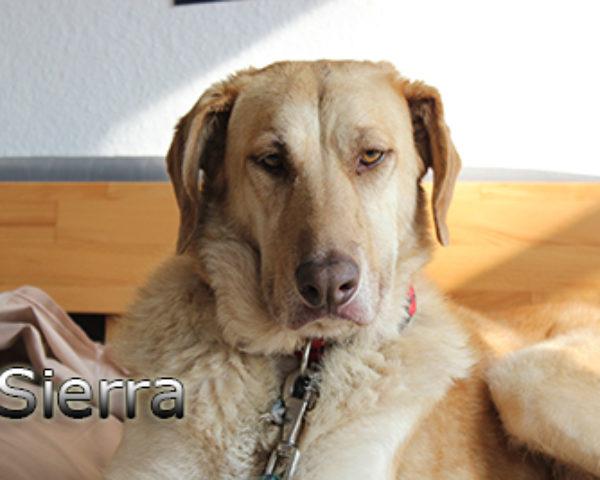Sierra_Update042019-(2)web