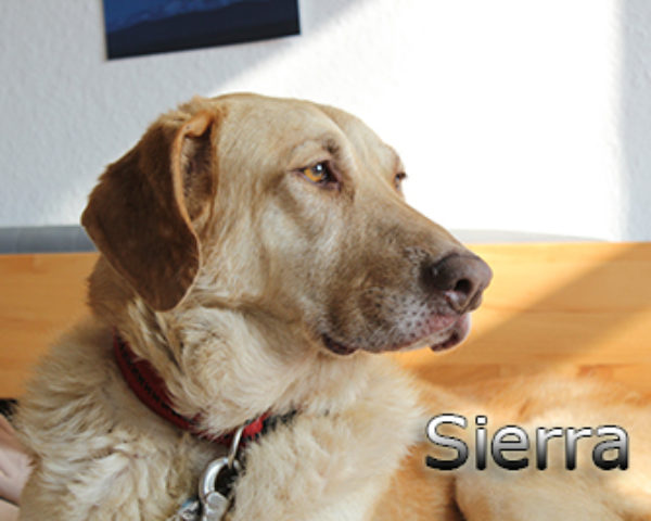 Sierra_Update042019-(4)web