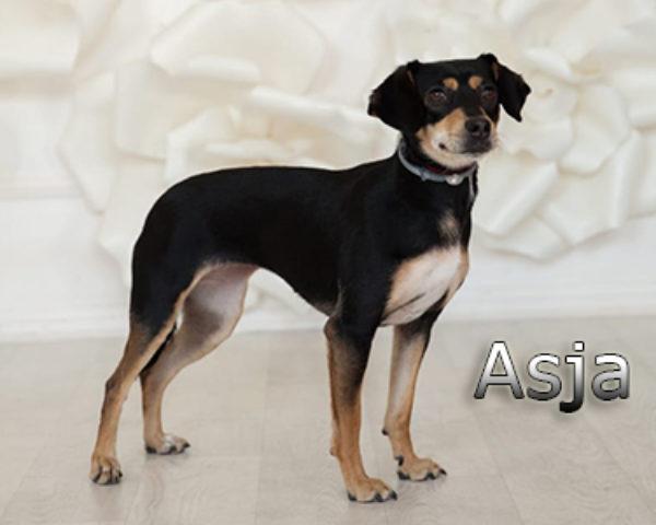 Asja-(14)WEB