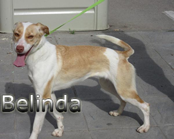 Belinda-(2)web