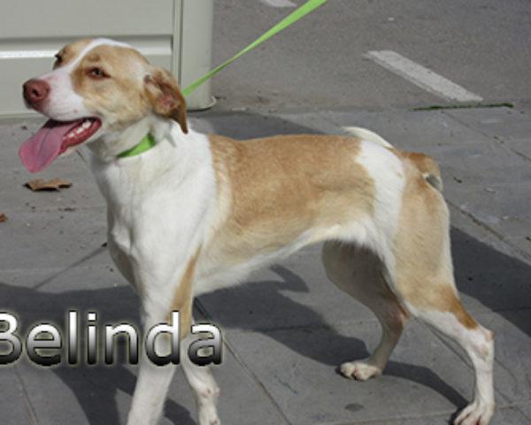 Belinda-(3)web
