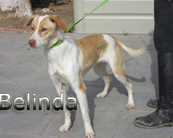 Belinda-(4)web